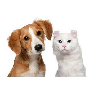 Γάτες-Σκύλοι
